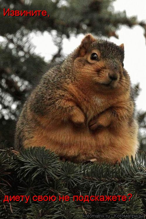 Котоматрица: Извините, диету свою не подскажете?
