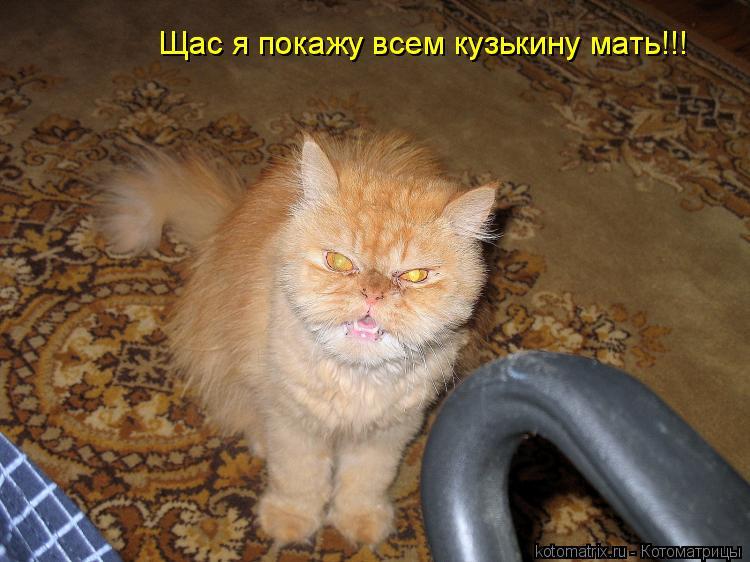 Котоматрица: Щас я покажу всем кузькину мать!!! Щас я покажу всем кузькину мать!!!