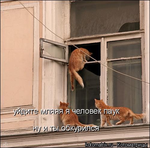 Котоматрица: уйдите мляяя я человек паук ну и ты обкурился