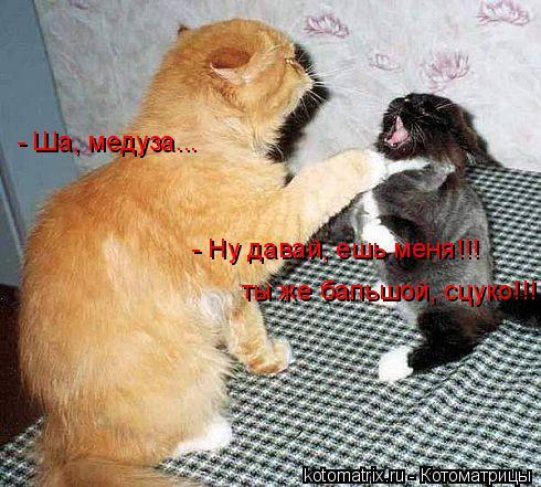 Котоматрица: - Ша, медуза... - Ну давай, ешь меня!!!  ты же бальшой, сцуко!!!