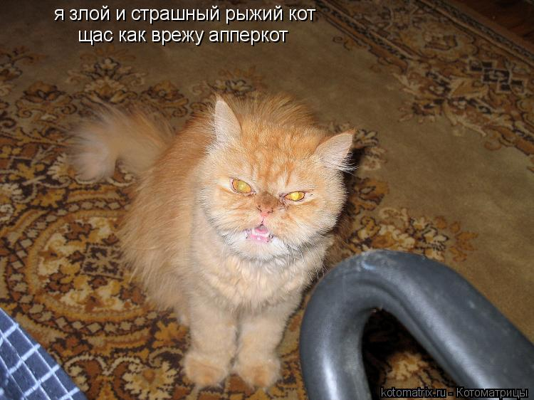 Котоматрица: я злой и страшный рыжий кот щас как врежу апперкот