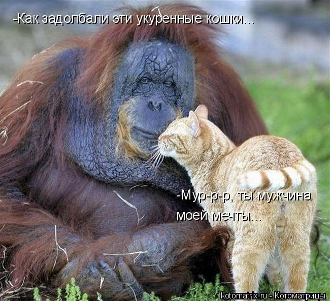 Котоматрица: -Мур-р-р, ты мужчина  моей мечты... -Как задолбали эти укуренные кошки...