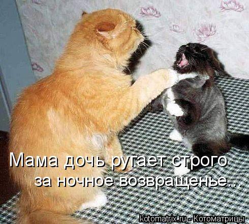 Котоматрица: Мама дочь ругает строго за ночное возвращенье...