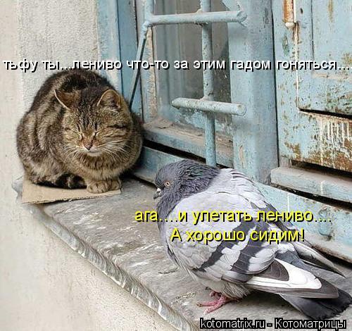 Котоматрица: тьфу ты...лениво что-то за этим гадом гоняться.... ага....и улетать лениво.... А хорошо сидим!