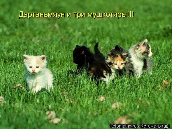Котоматрица: Дартаньмяун и три мушкотяры!!!
