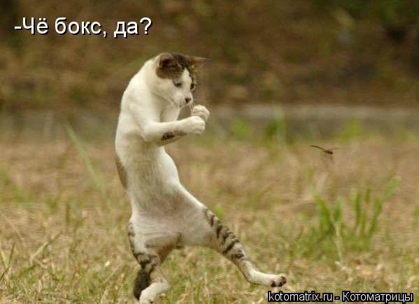 Котоматрица: -Чё бокс, да?