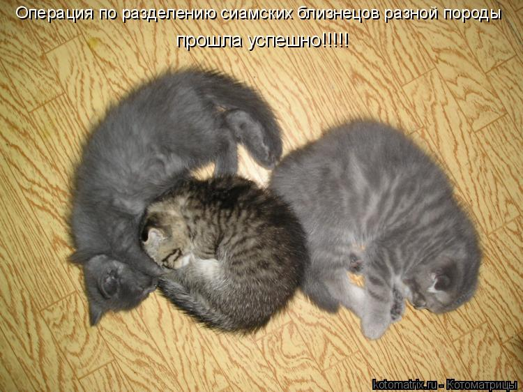 Котоматрица: Операция по разделению сиамских близнецов разной породы прошла успешно!!!!!