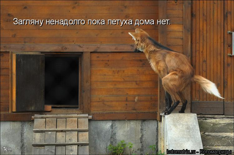 Котоматрица: Загляну ненадолго пока петуха дома нет.