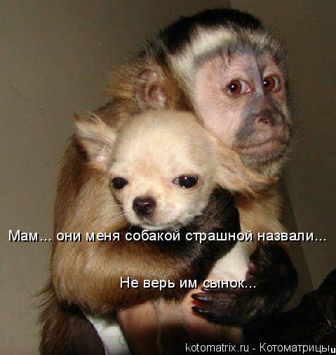 Котоматрица: Не верь им сынок... Мам... они меня собакой страшной назвали...