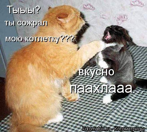 Котоматрица: Тыыы? ты сожрал вкусно паахлааа... мою котлетку???