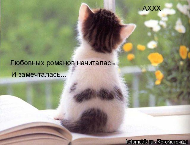 Котоматрица: Любовных романов начиталась.... И замечталась...  - АХХХ