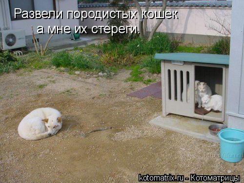 Котоматрица: Развели породистых кошек а мне их стереги.