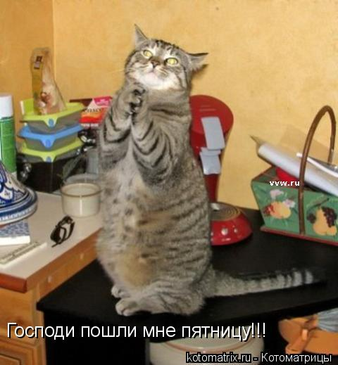 Котоматрица: Господи пошли мне пятницу!!!