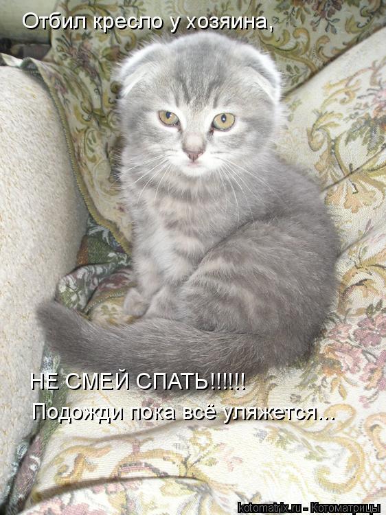 Котоматрица: Отбил кресло у хозяина, НЕ СМЕЙ СПАТЬ!!!!!! Подожди пока всё уляжется...