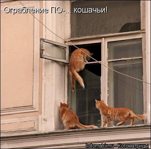 Котоматрица: Ограбление ПО-... кошачьи!