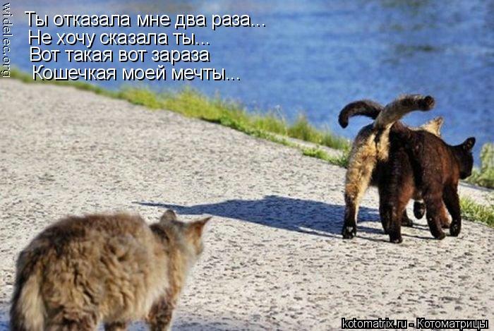 Котоматрица: Ты отказала мне два раза... Не хочу сказала ты... Вот такая вот зараза Кошечкая моей мечты...