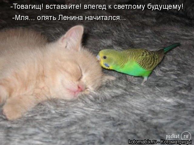 Котоматрица: -Товагищ! вставайте! впегед к светлому будущему! -Мля... опять Ленина начитался...