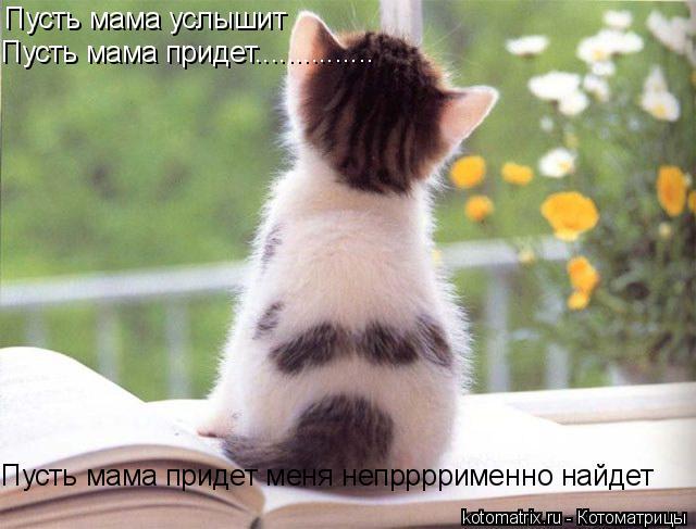 Котоматрица: Пусть мама услышит Пусть мама придет............... Пусть мама придет меня непррррименно найдет