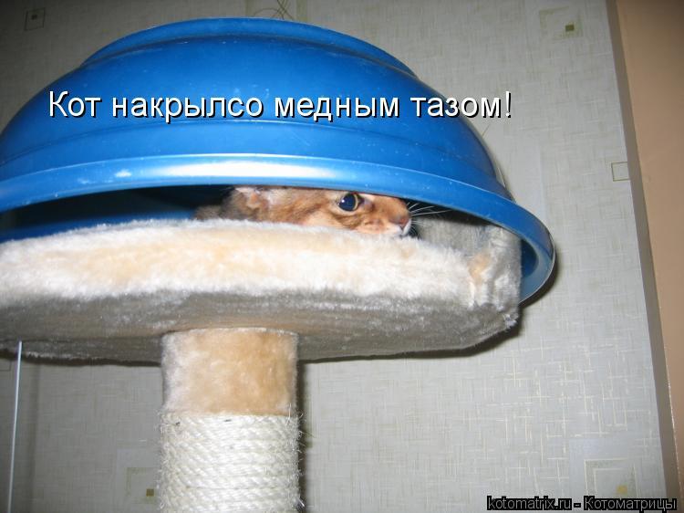 Котоматрица: Кот накрылсо медным тазом!