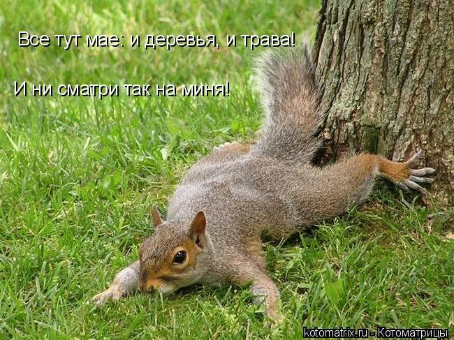 Котоматрица: Все тут мае: и деревья, и трава! И ни сматри так на миня!
