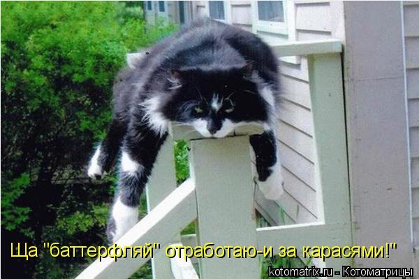 """Котоматрица: Ща """"баттерфляй"""" отработаю-и за карасями!"""""""
