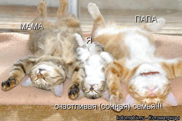 Котоматрица: МАМА ПАПА Я счастливая (сонная) семья!!!