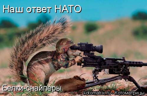 Котоматрица: Наш ответ НАТО Белки-снайперы