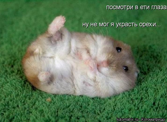 Котоматрица: ну не мог я украсть орехи... посмотри в ети глаза...