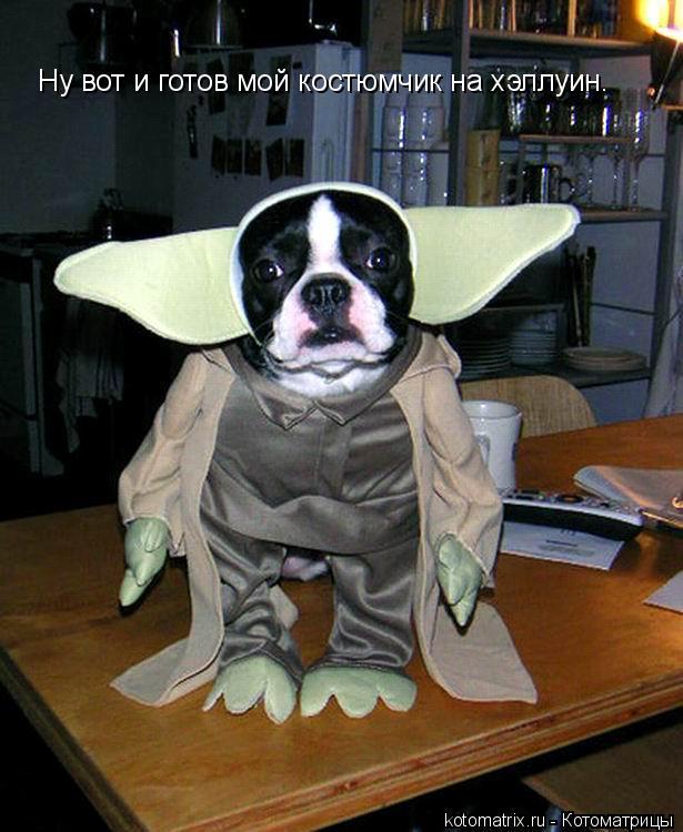 Котоматрица: Ну вот и готов мой костюмчик на хэллуин.