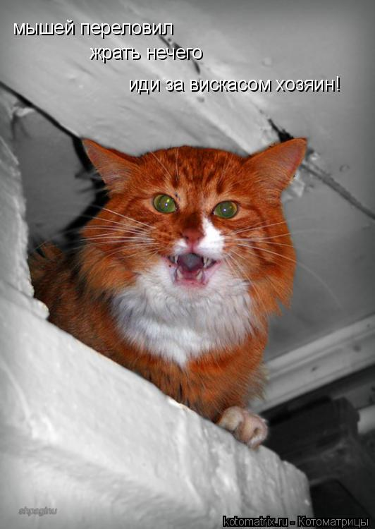 Котоматрица: мышей переловил жрать нечего иди за вискасом хозяин!