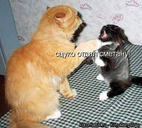 Котоматрица: сцуко отдал сметану!