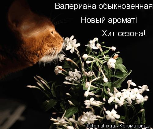 Котоматрица: Валериана обыкновенная Новый аромат! Хит сезона!