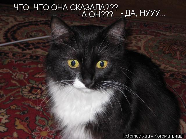 Котоматрица: ЧТО, ЧТО ОНА СКАЗАЛА??? - А ОН??? - ДА, НУУУ...