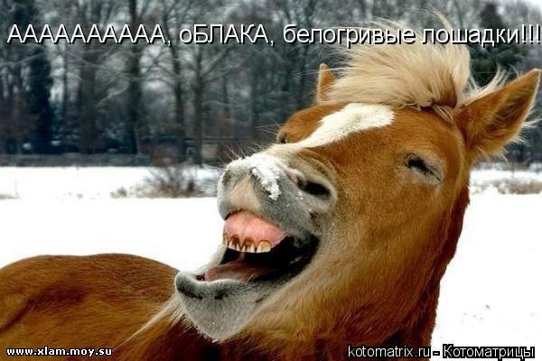 Котоматрица: АААААААААА, оБЛАКА, белогривые лошадки!!!!!!!!!!