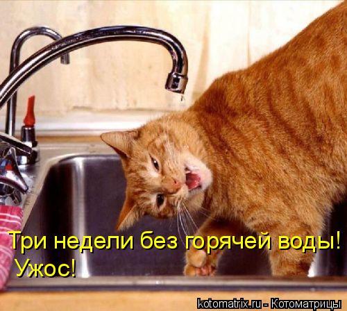 Котоматрица: Три недели без горячей воды!  Ужос!