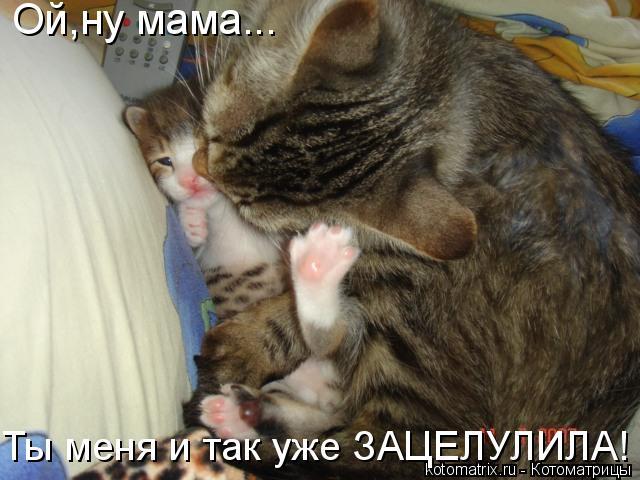 Котоматрица: Ой,ну мама... Ты меня и так уже ЗАЦЕЛУЛИЛА!