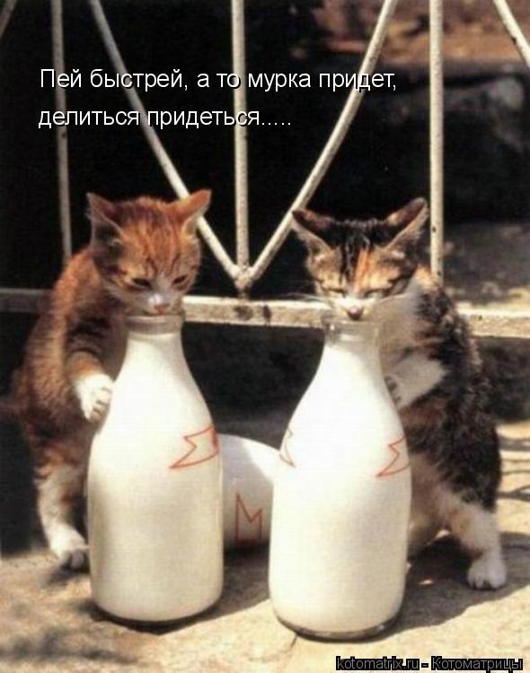 Котоматрица: Пей быстрей, а то мурка придет, делиться придеться.....