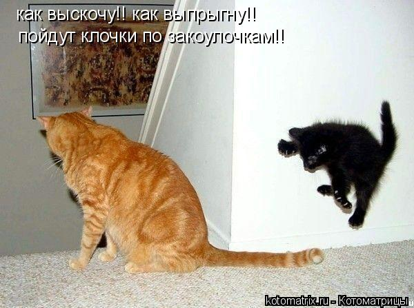 Котоматрица: как выскочу!! как выпрыгну!! пойдут клочки по закоулочкам!!