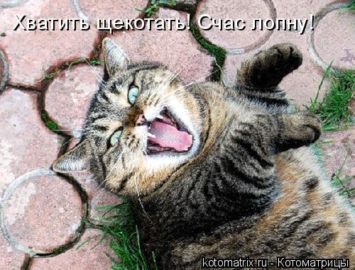 Котоматрица: Хватить щекотать! Счас лопну!