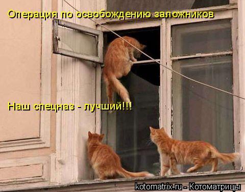 Котоматрица: Операция по освобождению заложников  Наш спецназ - лучший!!!