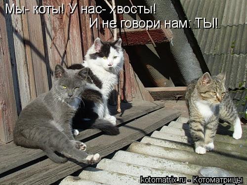 Котоматрица: Мы- коты! У нас- хвосты! И не говори нам: ТЫ!