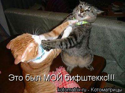Котоматрица: Это был МОЙ бифштеккс!!!