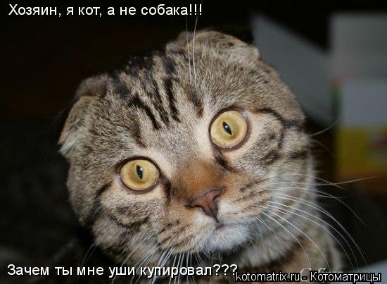 Котоматрица: Зачем ты мне уши купировал??? Хозяин, я кот, а не собака!!!