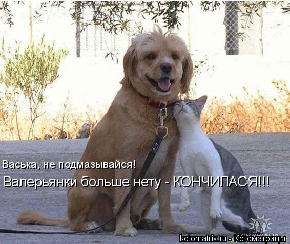 Котоматрица: Васька, не подмазывайся! Валерьянки больше нету - КОНЧИЛАСЯ!!!
