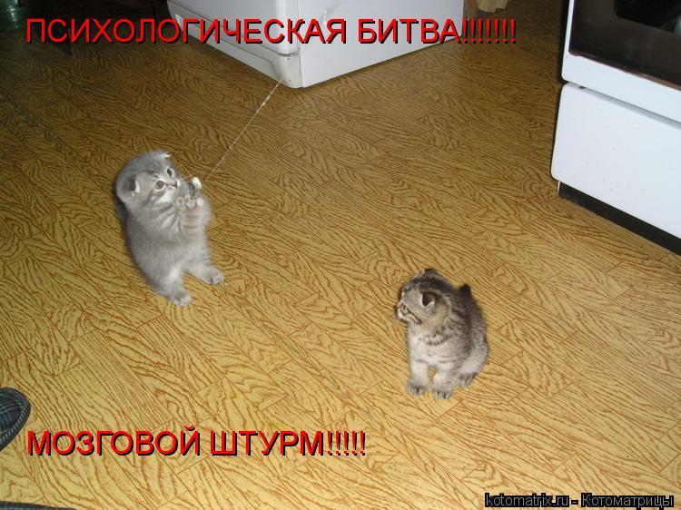 Котоматрица: ПСИХОЛОГИЧЕСКАЯ БИТВА!!!!!!! МОЗГОВОЙ ШТУРМ!!!!!