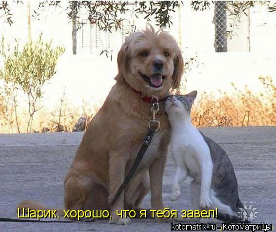 Котоматрица: Шарик, хорошо, что я тебя завел!
