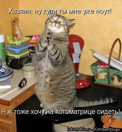 Котоматрица: Хазяин, ну купи ты мне уже ноут! Я ж тоже хочу на котоматрице сидеть!