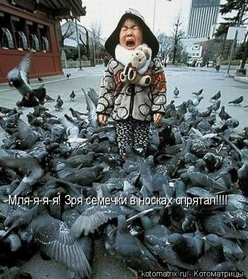 Котоматрица: -Мля-я-я-я! Зря семечки в носках спрятал!!!!
