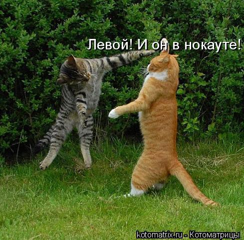 Котоматрица: Левой! И он в нокауте!