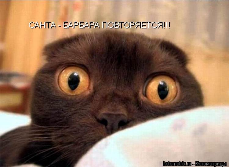 Котоматрица: САНТА - БАРБАРА ПОВТОРЯЕТСЯ!!!
